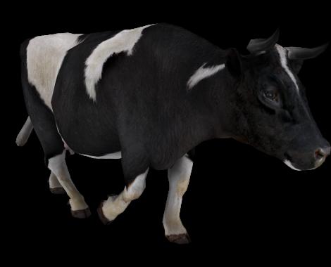 cow_dairysun